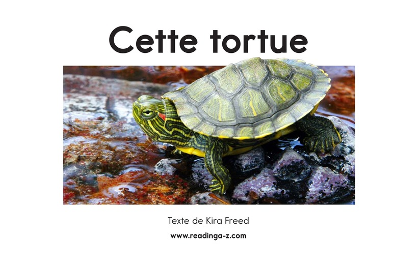 Book Preview For This Turtle Page 2