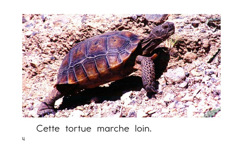 Book Preview For This Turtle Page 4