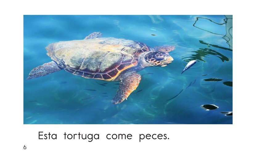 Book Preview For This Turtle Page 6