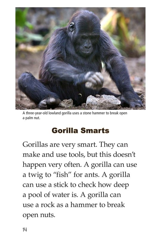 Book Preview For Gorillas Page 14