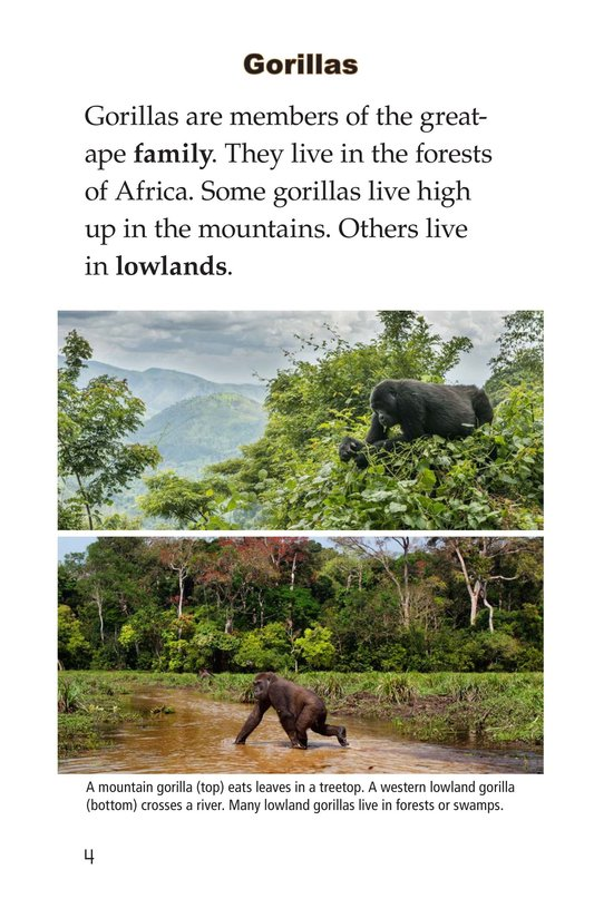 Book Preview For Gorillas Page 4