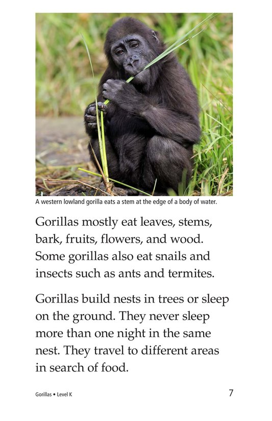 Book Preview For Gorillas Page 7