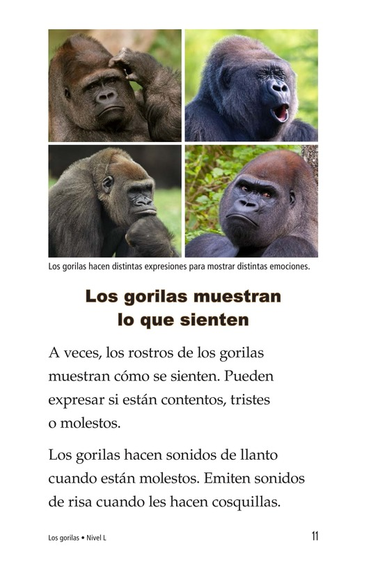 Book Preview For Gorillas Page 11