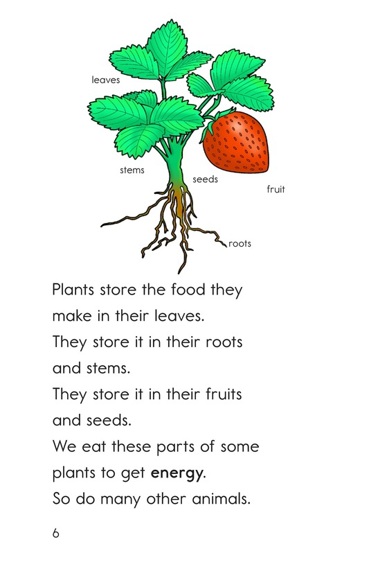 Book Preview For What Comes From Plants Page 6