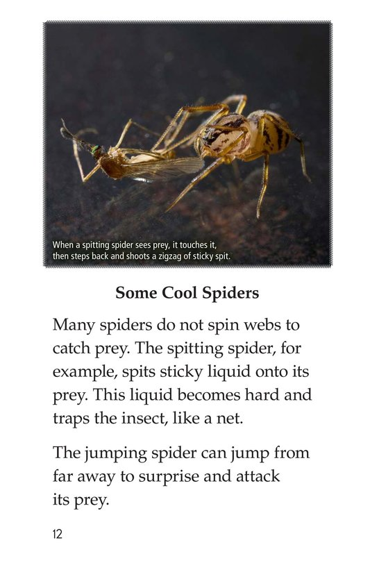 Book Preview For Spiders Page 12