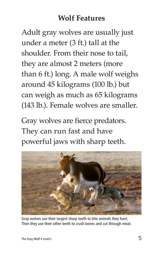 Book Preview For The Gray Wolf Page 5