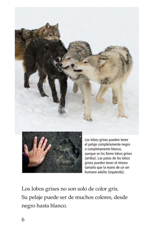 Book Preview For The Gray Wolf Page 6