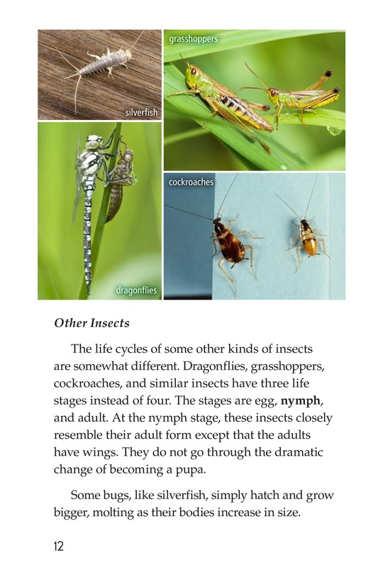 Book Preview For Life Cycles Page 12