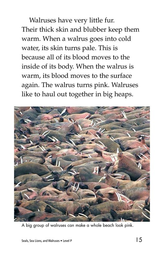 Book Preview For Seals, Sea Lions, and Walruses Page 15