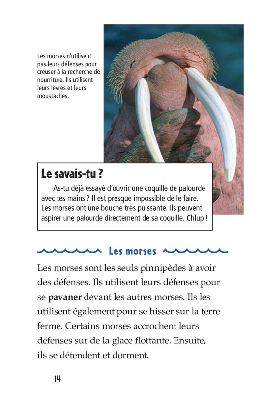 Book Preview For Seals, Sea Lions, and Walruses Page 14