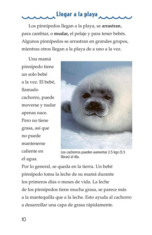 Book Preview For Seals, Sea Lions, and Walruses Page 10