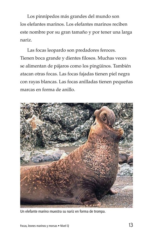 Book Preview For Seals, Sea Lions, and Walruses Page 13