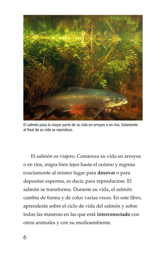 Book Preview For Salmon: A Link in the Food Chain Page 6