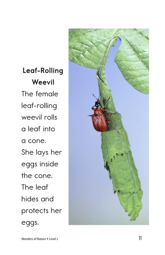 Book Preview For Wonders of Nature Page 11