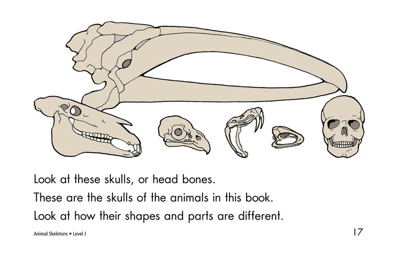 Book Preview For Animal Skeletons Page 17