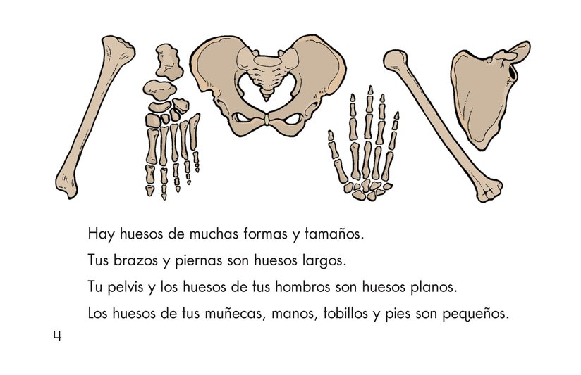 Book Preview For Animal Skeletons Page 4
