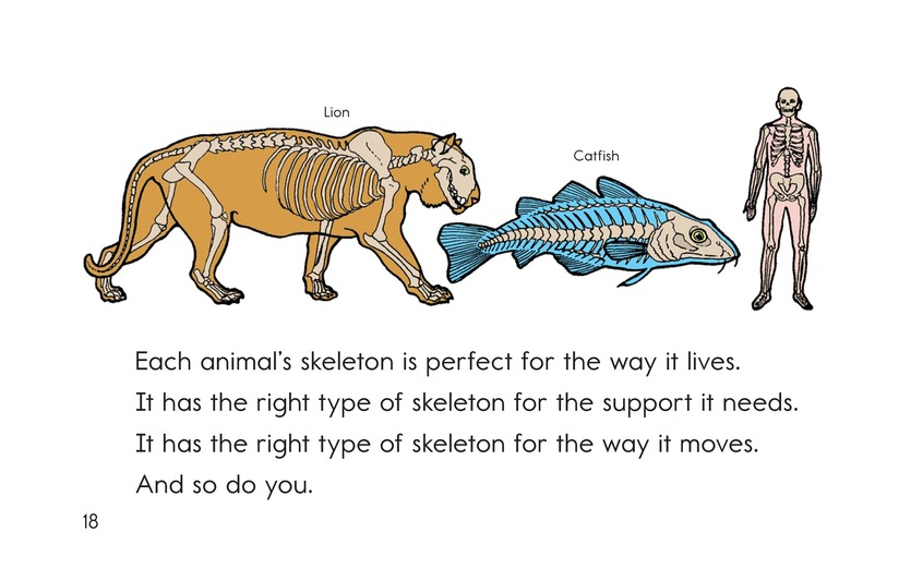 Book Preview For Animal Skeletons Page 18