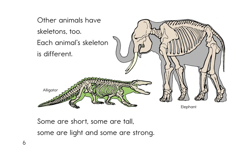 Book Preview For Animal Skeletons Page 6