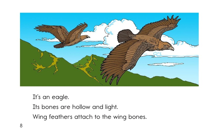 Book Preview For Animal Skeletons Page 8