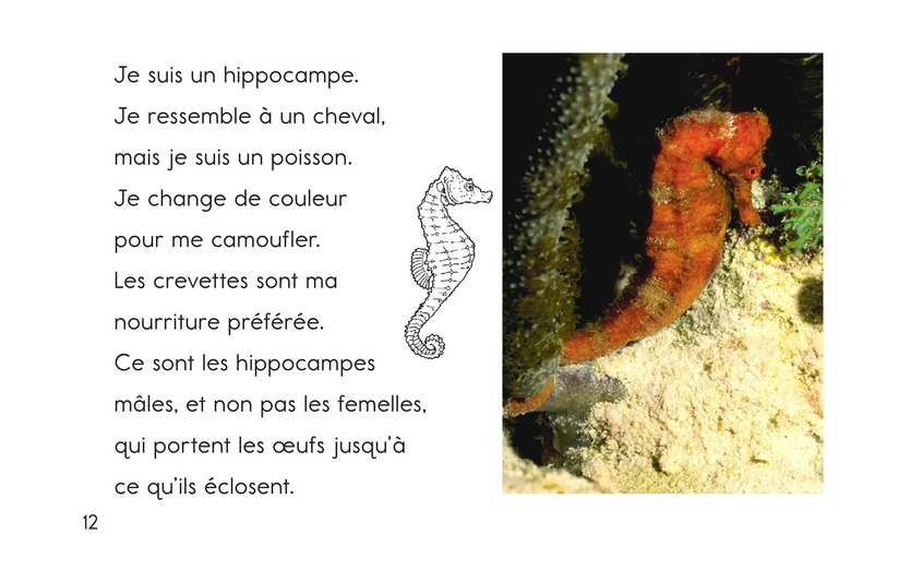 Book Preview For Ocean Animals Page 12
