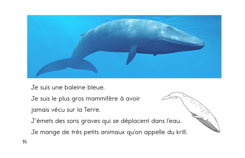 Book Preview For Ocean Animals Page 14