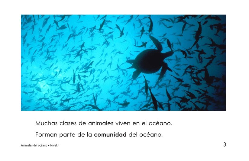 Book Preview For Ocean Animals Page 3