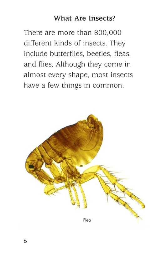Book Preview For Insect Life Cycle Page 6