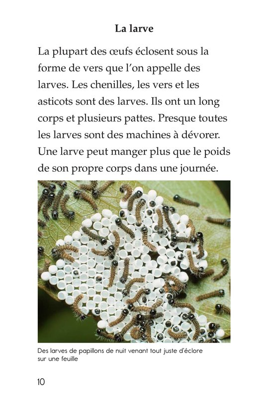 Book Preview For Insect Life Cycle Page 10