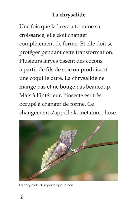 Book Preview For Insect Life Cycle Page 12
