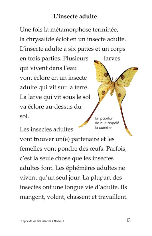 Book Preview For Insect Life Cycle Page 13