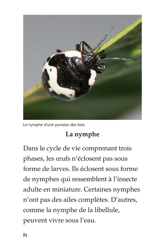 Book Preview For Insect Life Cycle Page 14