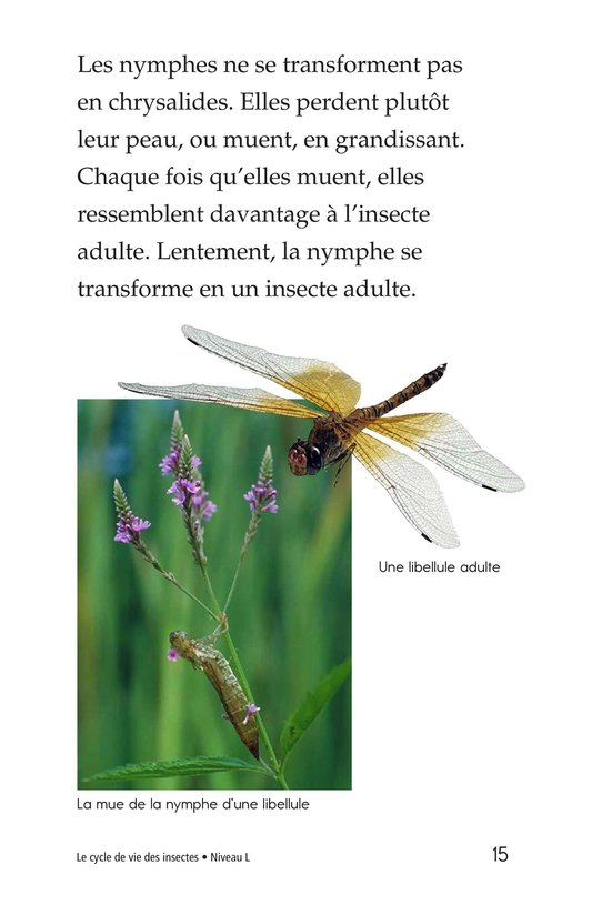 Book Preview For Insect Life Cycle Page 15