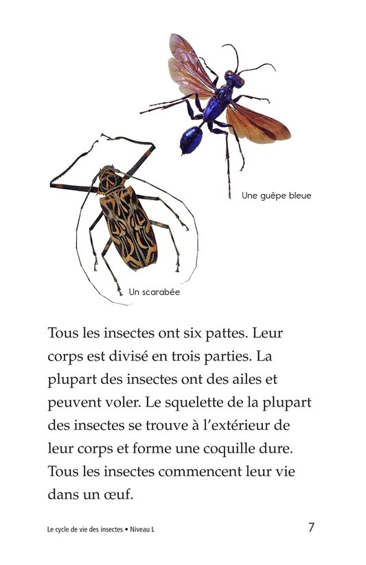 Book Preview For Insect Life Cycle Page 7