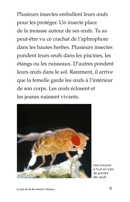 Book Preview For Insect Life Cycle Page 9