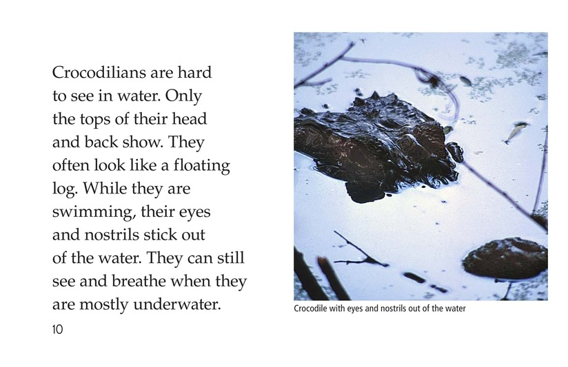 Book Preview For Crocs and Gators Page 10