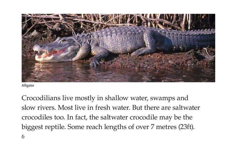 Book Preview For Crocs and Gators Page 6
