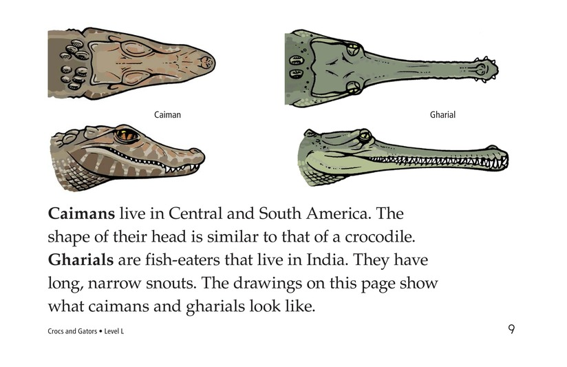 Book Preview For Crocs and Gators Page 9