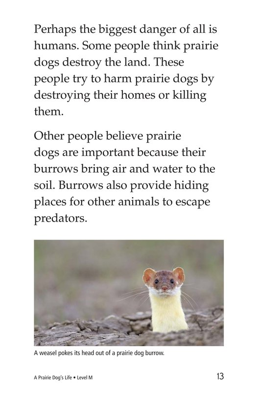 Book Preview For A Prairie Dog's Life Page 13