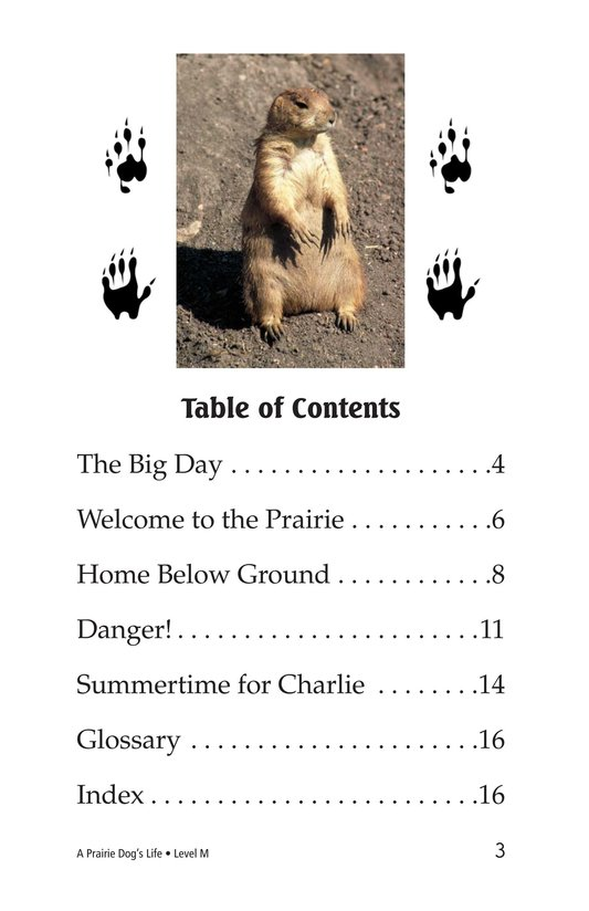 Book Preview For A Prairie Dog's Life Page 3
