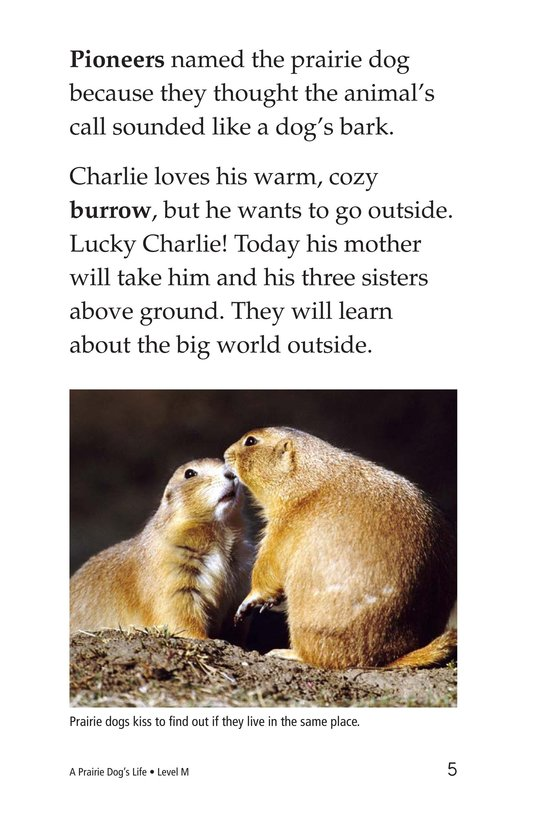 Book Preview For A Prairie Dog's Life Page 5