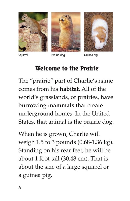 Book Preview For A Prairie Dog's Life Page 6