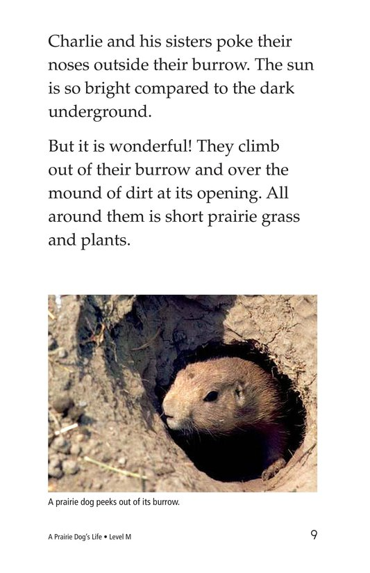 Book Preview For A Prairie Dog's Life Page 9