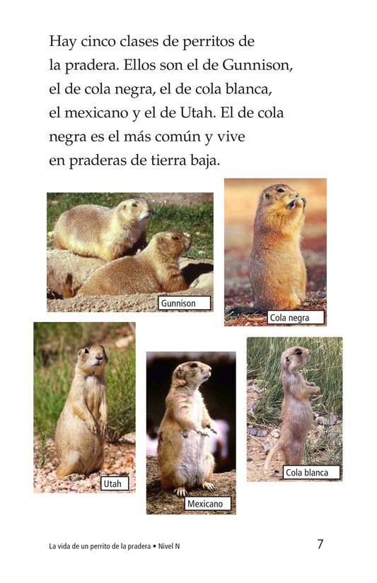 Book Preview For A Prairie Dog's Life Page 7