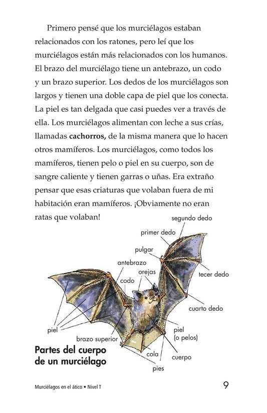 Book Preview For Bats in the Attic Page 9