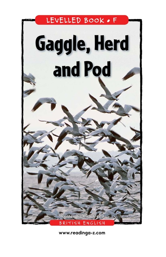 Book Preview For Gaggle, Herd, and Murder Page 1