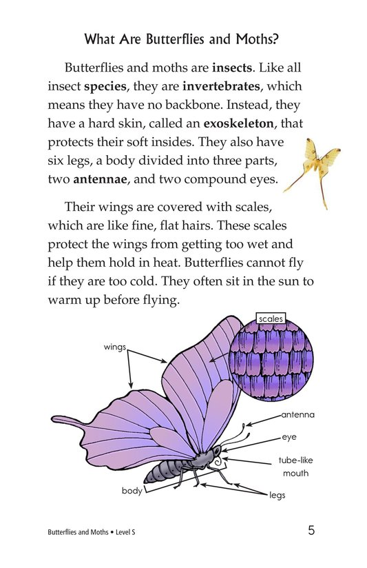 Book Preview For Butterflies and Moths Page 5