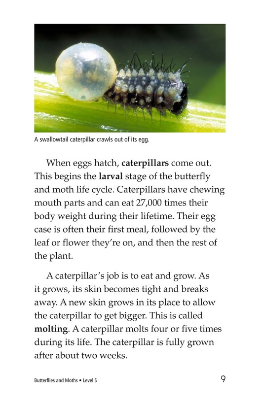 Book Preview For Butterflies and Moths Page 9