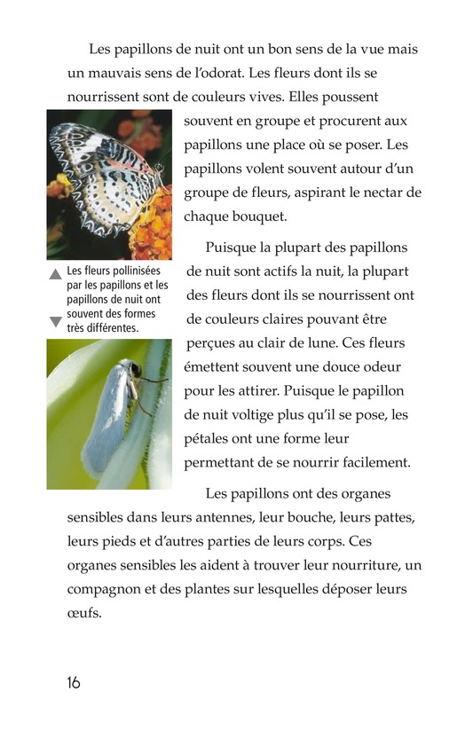 Book Preview For Butterflies and Moths Page 16