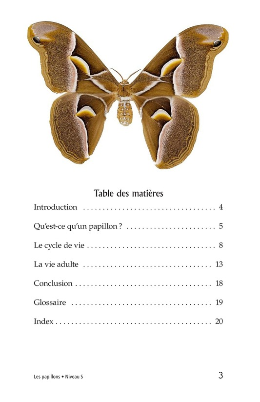 Book Preview For Butterflies and Moths Page 3