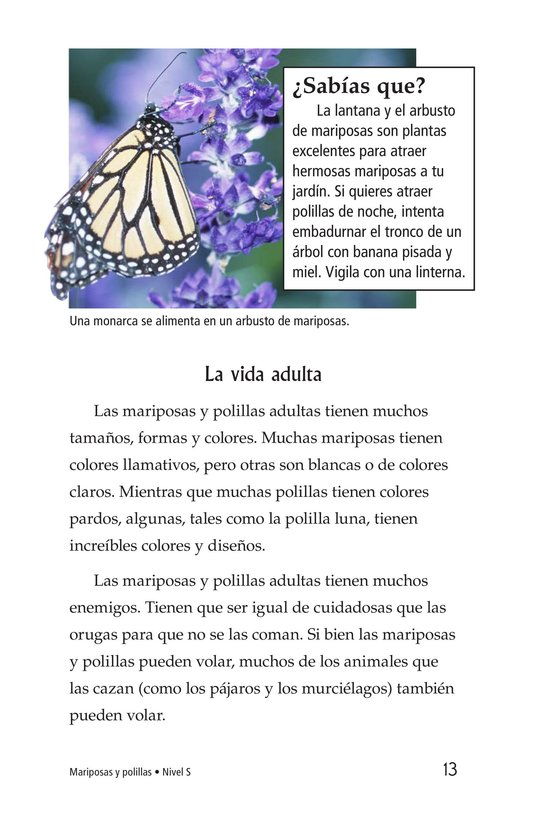 Book Preview For Butterflies and Moths Page 13